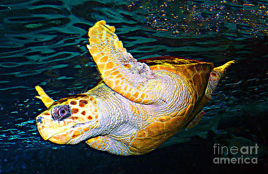 Bentley The Turtle by Kendall Eutemey