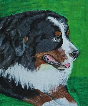 Bernese Mountain Dog by Jody Neugebauer
