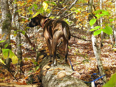 Bernie the Tree Walking Dog by Sandra Martin