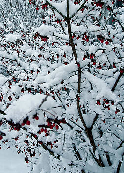 Berries in Snow by Nickaleen Neff