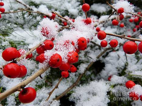 Christine Stack - Berries in the Snow