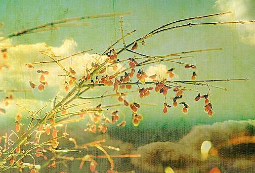 Marysue Ryan - Berries and sky