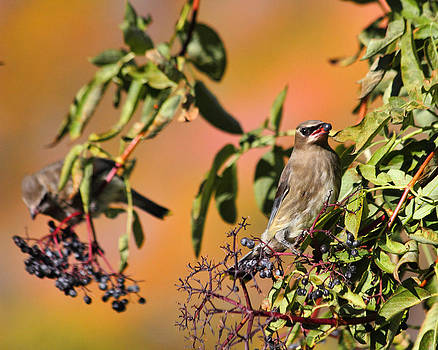 Berry Good Lunch by Gene Praag