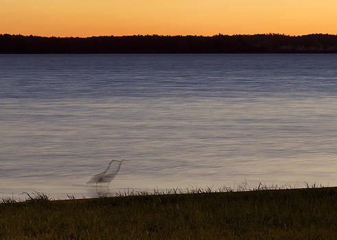 Beside Myself - Great Blue Heron at sunset by Jane Eleanor Nicholas