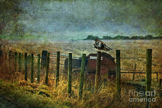 Liz  Alderdice - Beside The Road