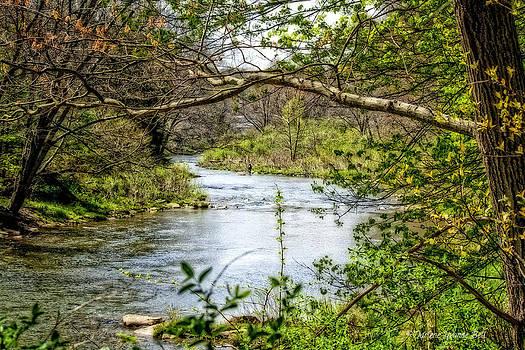 Beside The Stream by Darlene Bell