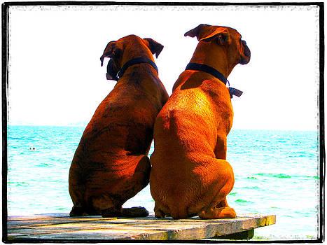 Laura Carter - Best Friends Dog Photograph Fine Art Print