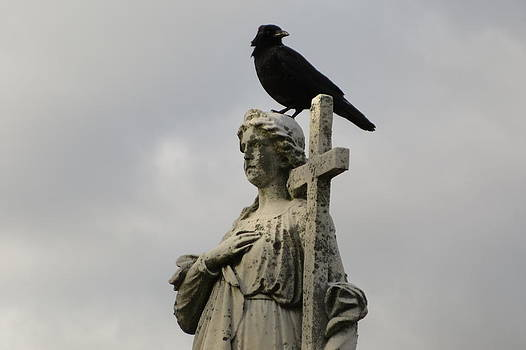 Gothicrow Images - Best Perch Ever