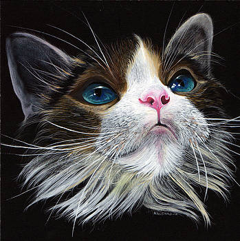 Beta Cat by Naushad  Waheed