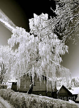 Betula in winter-sepia by Lilianna Sokolowska