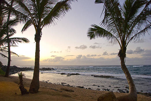 Between Two Palms by Chris Ann Wiggins