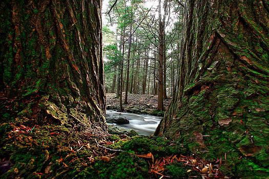 Dawn J Benko - Between Two Trees