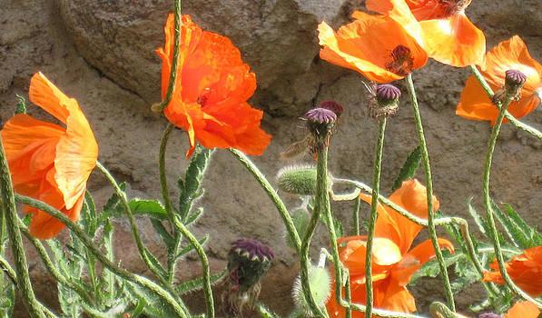 Beulah Orange by Tammy Sutherland