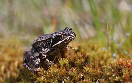 Dreamland Media - Beutiful Frog on the Moss