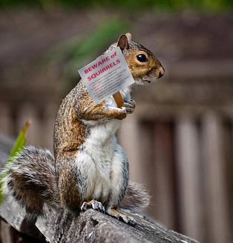 Beware of Squirrels by Elaine Snyder