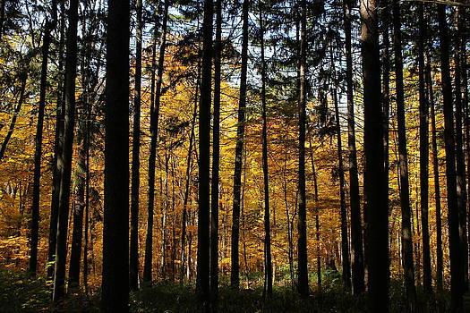Rosanne Jordan - Beyond the Spruce Path