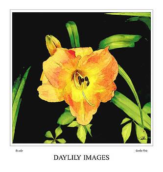 Bi-color Daylily by Gordon Fritz