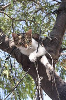 Tracey Harrington-Simpson - Bi-Color Tabby Cat In Tree 3