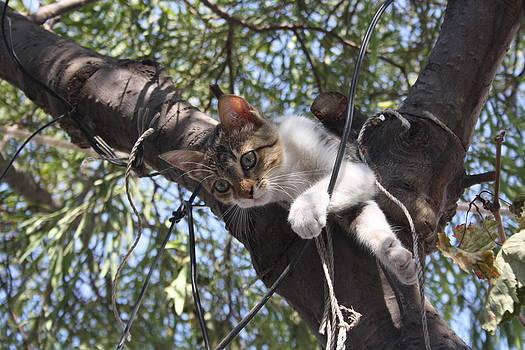 Tracey Harrington-Simpson - Bi-Color Tabby Cat In Tree 4