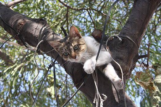 Tracey Harrington-Simpson - Bi-Color Tabby Cat In Tree 5