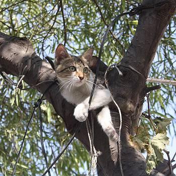 Tracey Harrington-Simpson - Bi-Color Tabby Cat In Tree