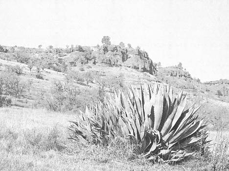 Frank Wilson - Bidwell Park Cactus