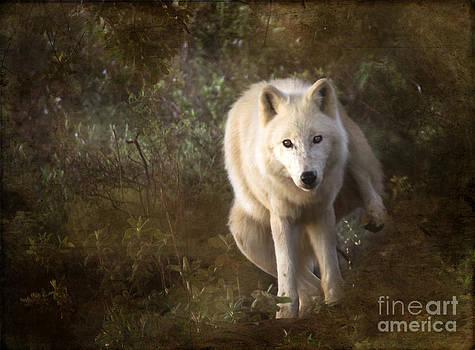 Angel Ciesniarska - big bad wolf sprinkling the grass
