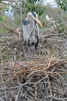 Patricia Twardzik - Big Birds Big Nests