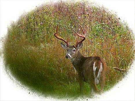 Big Buck Vignette by J D  Whaley