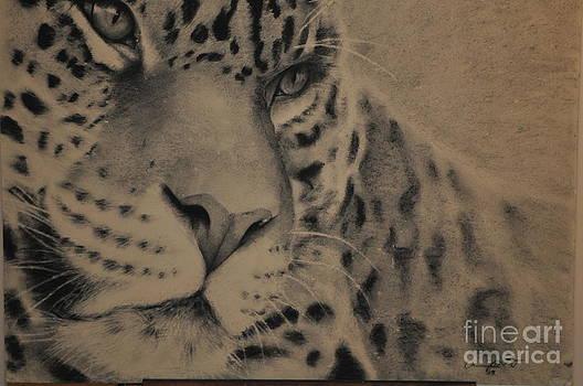 Big Cat by Adrian Pickett