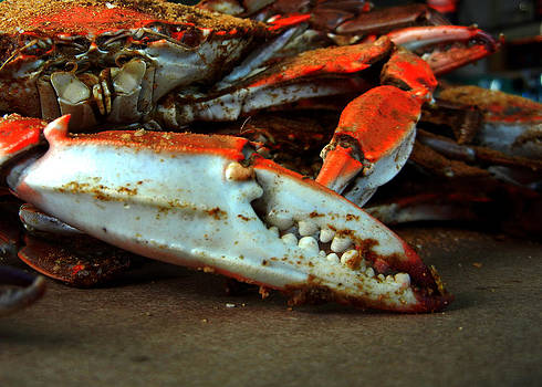 Bill Swartwout Fine Art Photography - Big Crab Claw