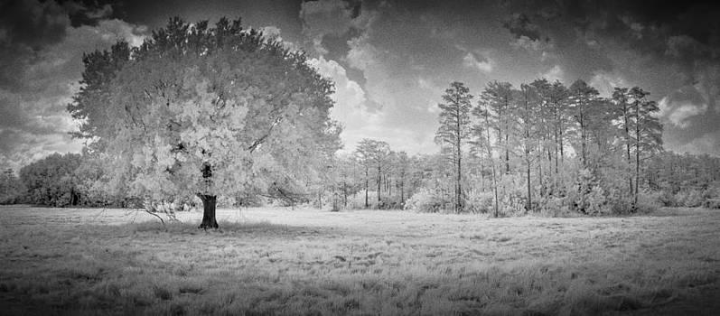 Big Cypress Pano by Bradley R Youngberg