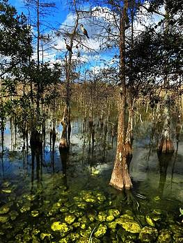 Big Cypress Preserve  Series by Bill Marder
