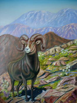 Big Horn by Brent Vall Peterson