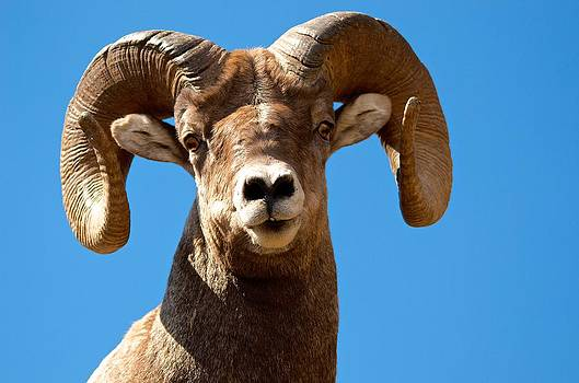 Big Horn by Gary Campbell