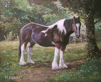 Martin Davey - Big horse in field
