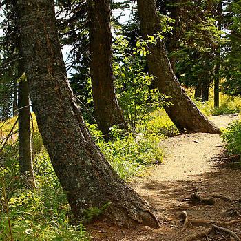 Big Mountain Trail by Jim Cotton