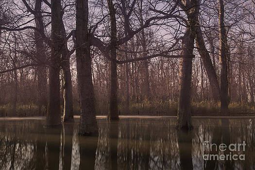 Larry Braun - Big Oak State Park