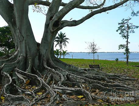 Rachel Gagne - Big Old Tree