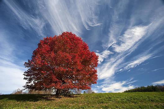 Big Red by Wayne Letsch