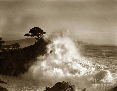 California Views Mr Pat Hathaway Archives - Big Wave hitting the Lone Cypress Tree Pebble Beach California 1916