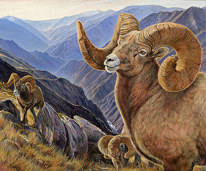 Bighorn Trio by Steve Spencer