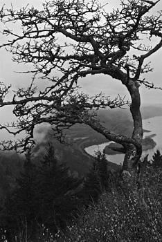 Billowing Fog  by Rae Berge