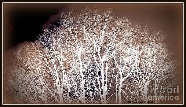Birch-like N Browns by Deb Badt-Covell