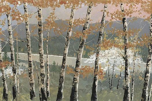 Birch Stand by John Wyckoff