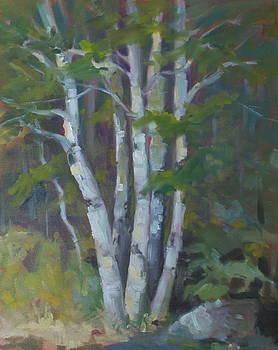 Birches by Elaine Hurst