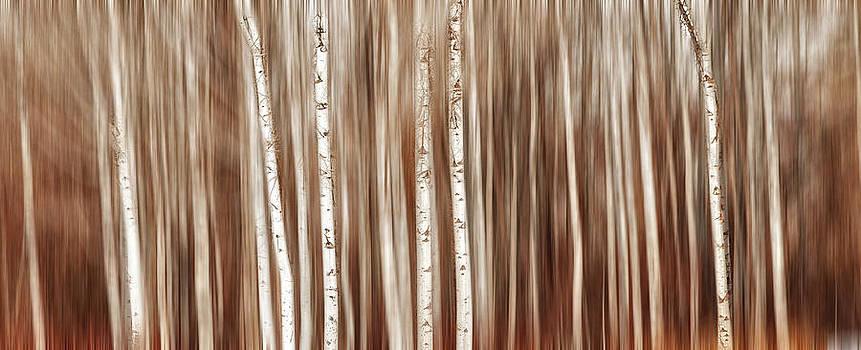 Mary Jo Allen - Birches in Motion