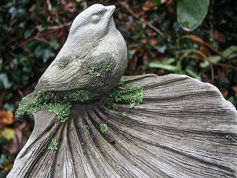 Sandy Tolman - Bird and Lichen 7055