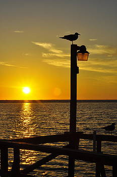 Bird and Sunset by Angela Castillo