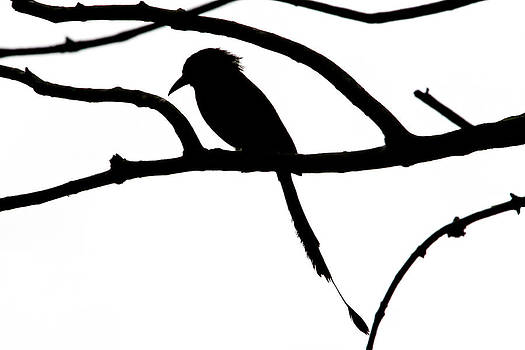 Peggy Collins - Bird and Tree Silhouette